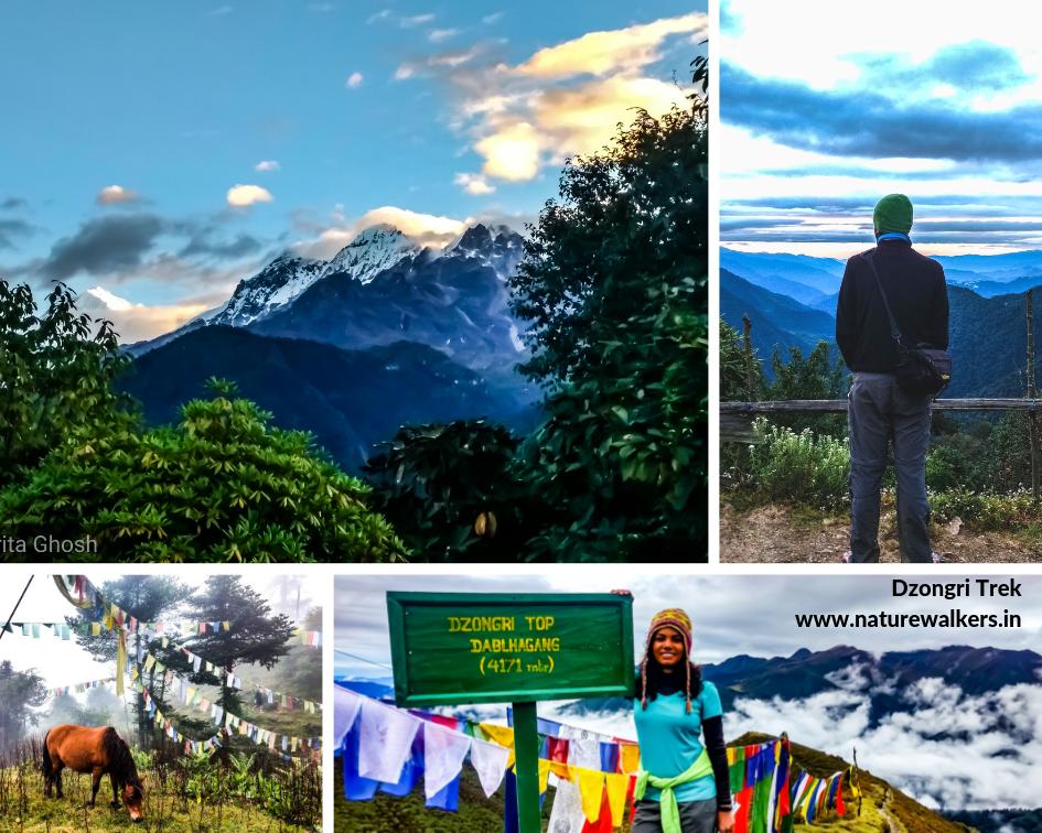 Drongri Trek - trekking in india - naturewalkers.in
